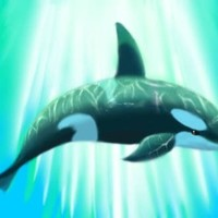 killer whale 【KW】