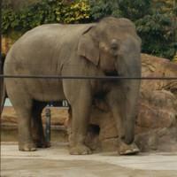 象を見る人