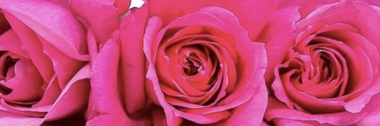 Rose.X
