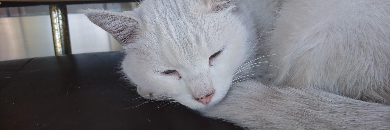 白猫ちゃん!&黒猫ちゃん!