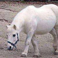 thx_pony