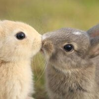 悪戯ウサギ