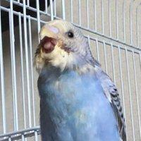 cuckoo_2424
