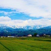 kenji_uchiura