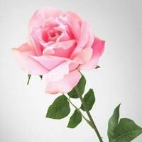 *Rose*
