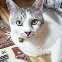 ドラ猫のtomo