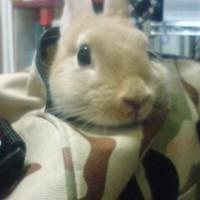 こうちゃん兔