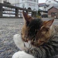 Takeshita311