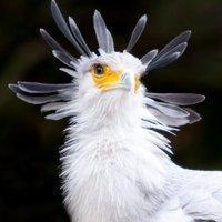 サバワシトカゲ